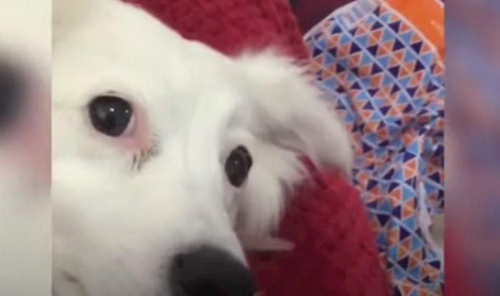 VIDEO Morate vidjeti urnebesnu reakciju ove kujice kad joj vlasnik kaže da je debela