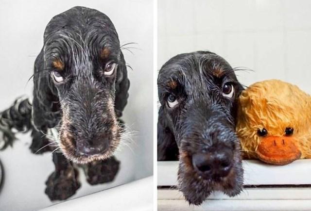 """11. """"Naš pas mrzi kupanja. Ali sve je lakše podnjeti kad se s njim kupa i njegova patkica!"""""""