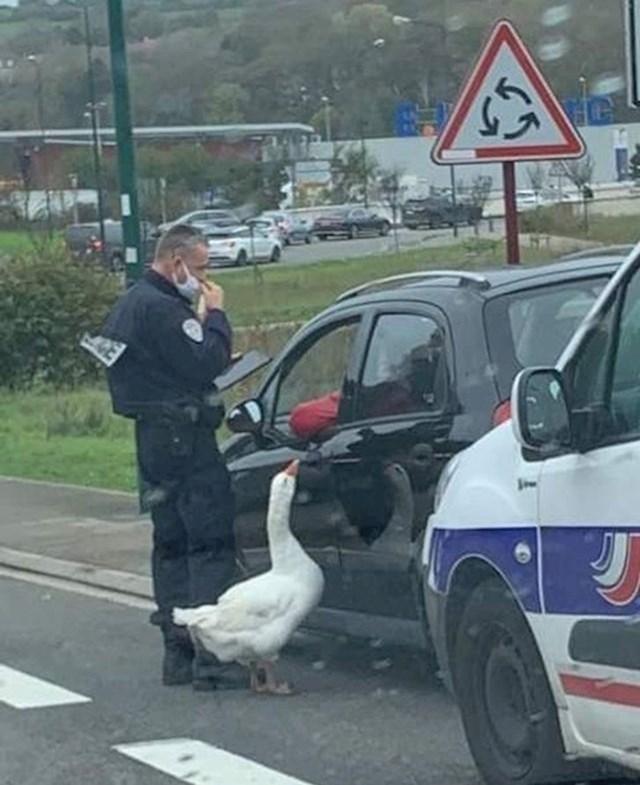 11. Policajac i njegov kolega - gusak