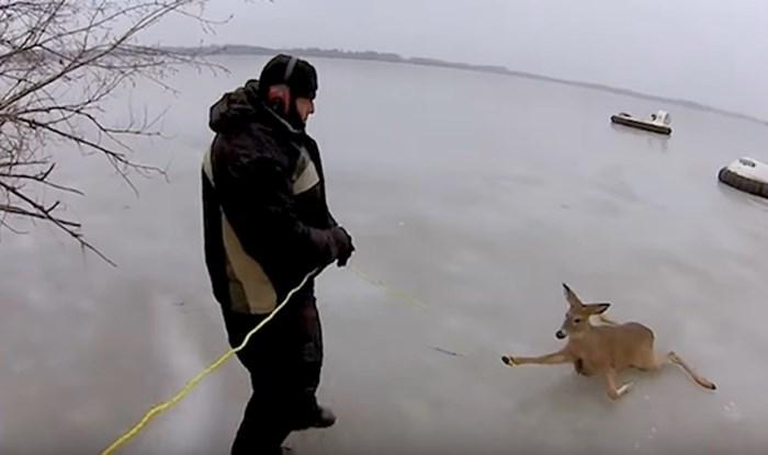 VIDEO Dirljiva snimka spašavanja srna koje su zapele usred zaleđenog jezera