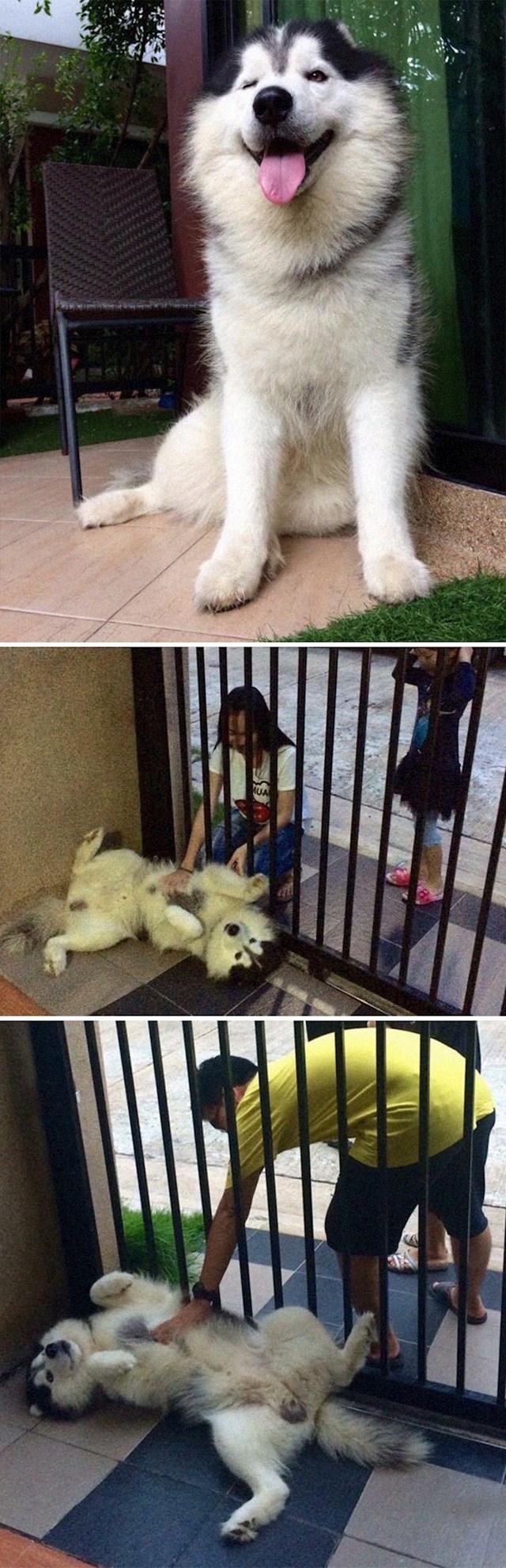 """15. """"Htjeli smo psa čuvara, a ovaj bi se prodao za malo češkanja."""""""