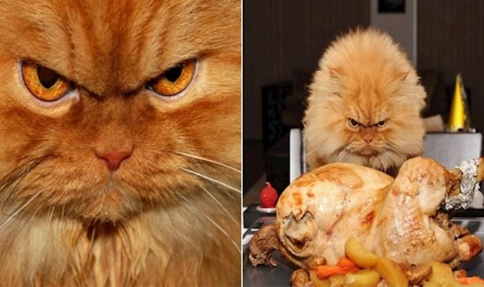Mrzovoljni mačak Garfi postao je zvijezda zbog svojih ljutih grimasa, evo njegovih najboljih fotki