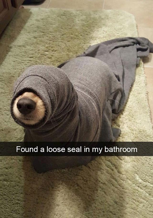 9. Pronašla sam odbjeglog tuljana u kupaoni...😆