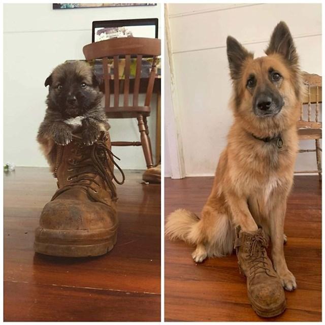 6. Tri godine kasnije - ista cipela.