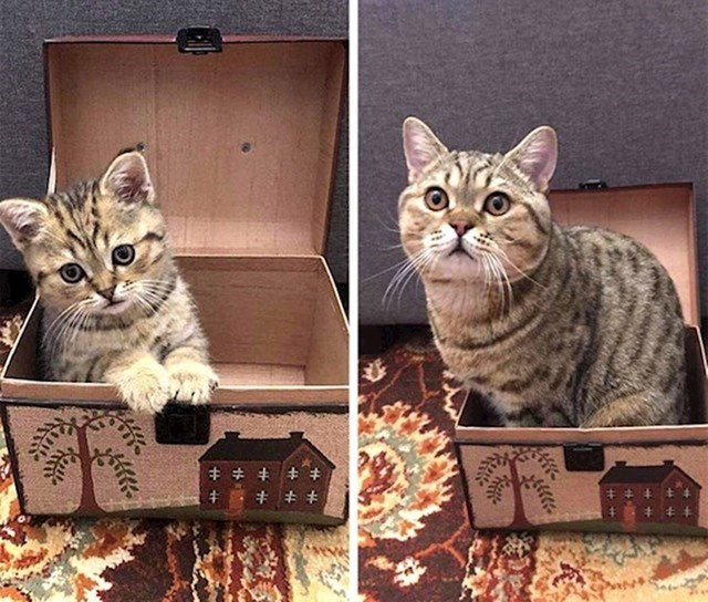 """""""Ma kutija se smanjila..."""""""