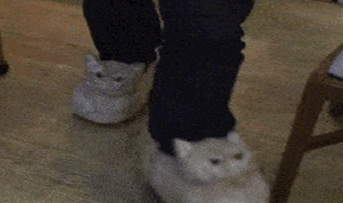 Nabavio je nove papuče, ali njegov kućni ljubimac nije ih odobrio