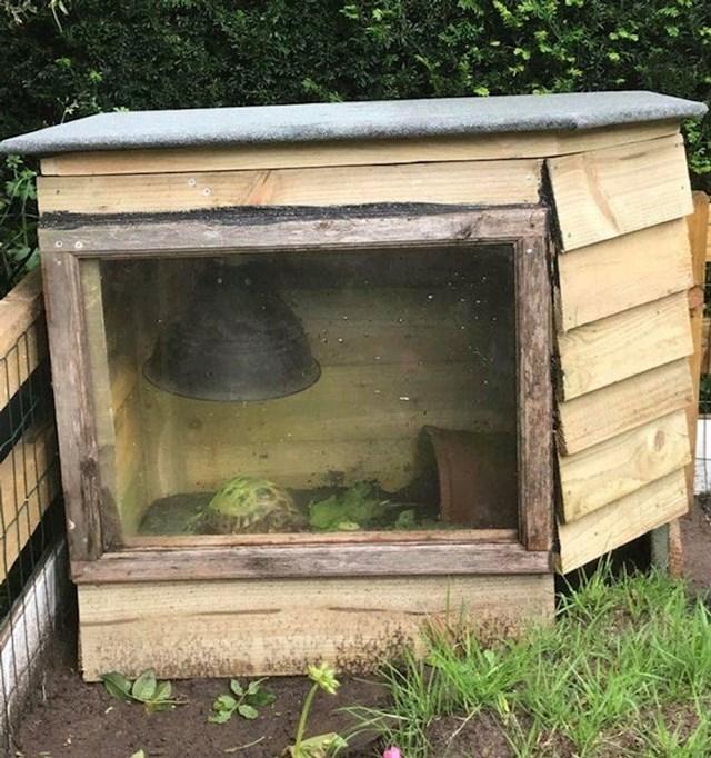"""15. """"Moj tata napravio je vanjsku kućicu za našu obiteljsku kornjaču."""""""