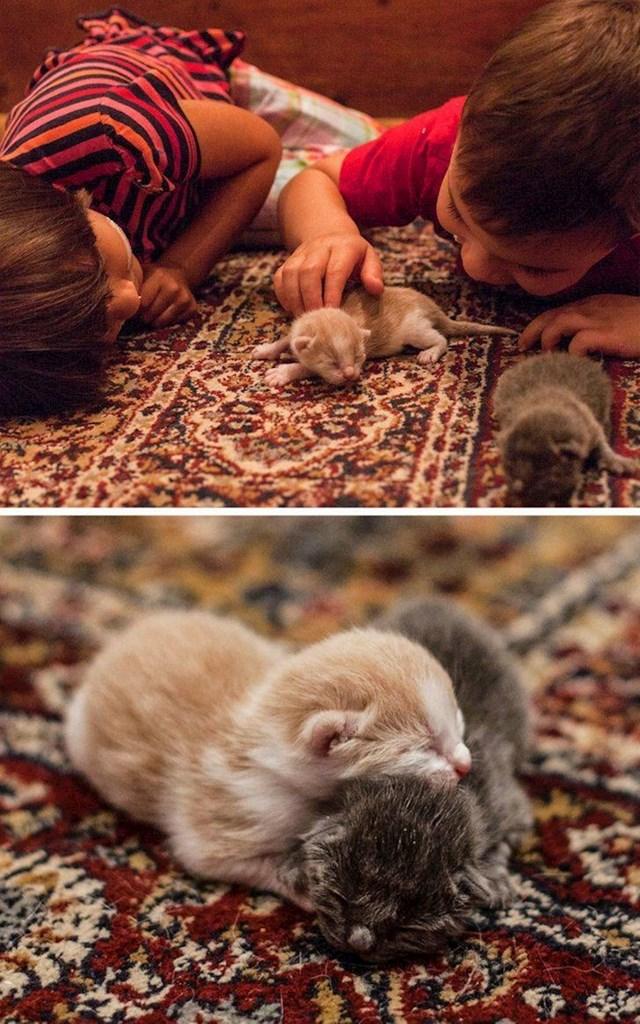 """""""Udomili smo macu koja nas je pratila do kuće. Sutradan ujutro dočekalo nas je iznenađenje."""""""
