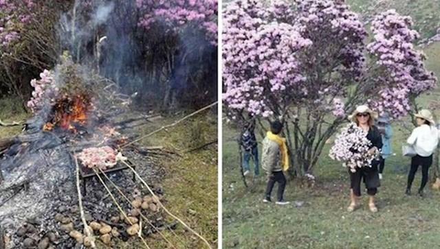 #13 Turisti uništavaju prekrasna stabla azaleje u Kini, a neki su čak otišli u toliku krajnost da su ih iskoristili kao grane za roštilj