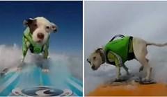 VIDEO Pit bull spašen s lanca postao profić u surfanju