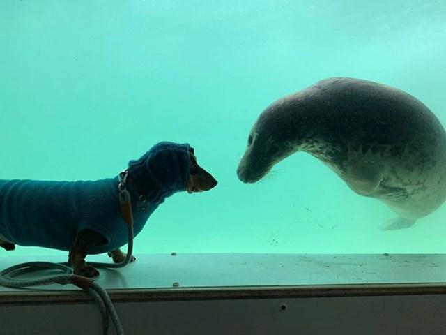 Stanley i Aayla, kopneni i morski psić, nedavno su postali prijatelji tijekom njegovog odmora u Cornwellu.