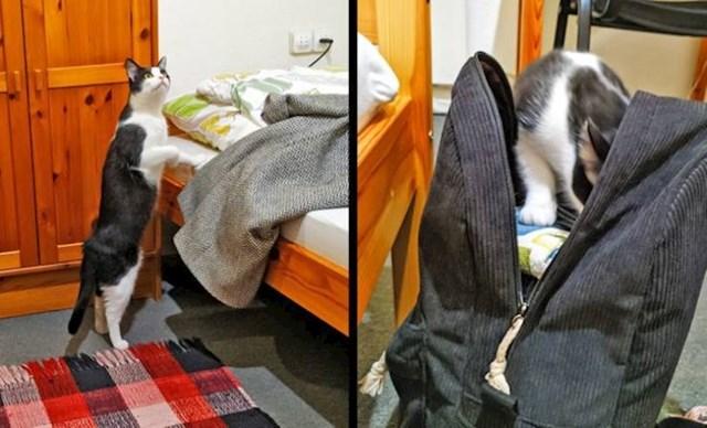 10. Maca iz susjedne sobe došla je provjeriti tko sam ja i što sve imam u ruksaku