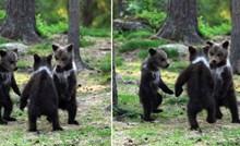 Fotograf nije mogao vjerovati svojim očima kad je vidio medvjediće koji plešu