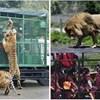 Ovako izgleda Zoološki vrt u kojem su ljudi u kavezima, a životinje slobodne