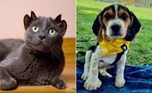 Geni su se malo poigrali s ovim kućnim ljubimcima, zbog malih neobičnosti još su slađi