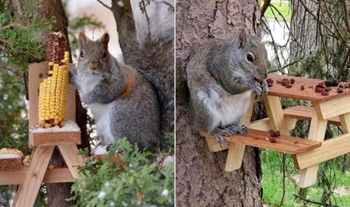 Preslatki piknik stolovi koje su ljudi u svojim dvorištima napravili za vjeverice