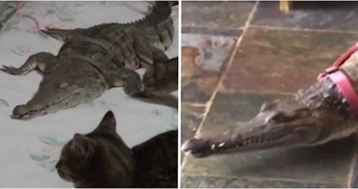 VIDEO Ova žena već 30 godina drži krokodile kao kućne ljubimce