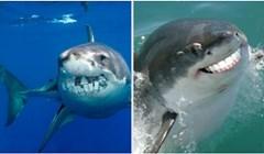 15 urnebesnih fotki morskih pasa s fotošopiranim ljudskim zubima