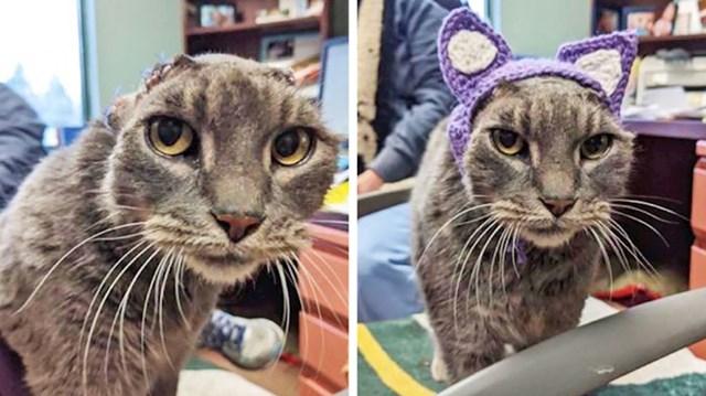 Maca koja je izgubila uši zbog teške infekcije dobila je ovu preslatku pletenu repliku. :)