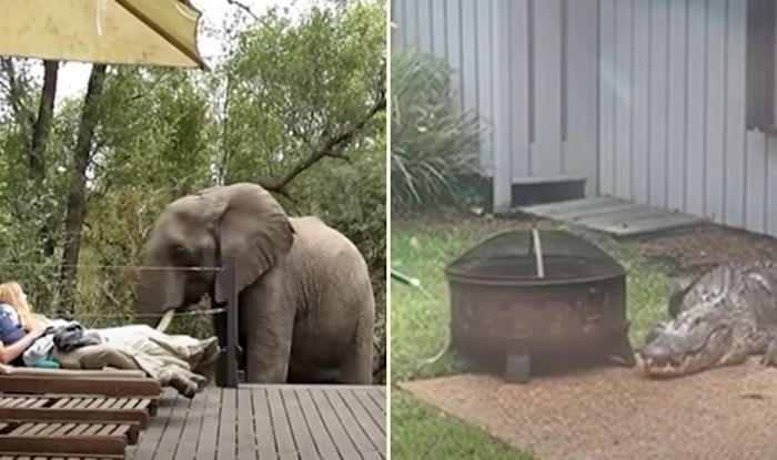 VIDEO 10 puta kad su divlje životinje odlučile posjetiti ljude u njihovim domovima