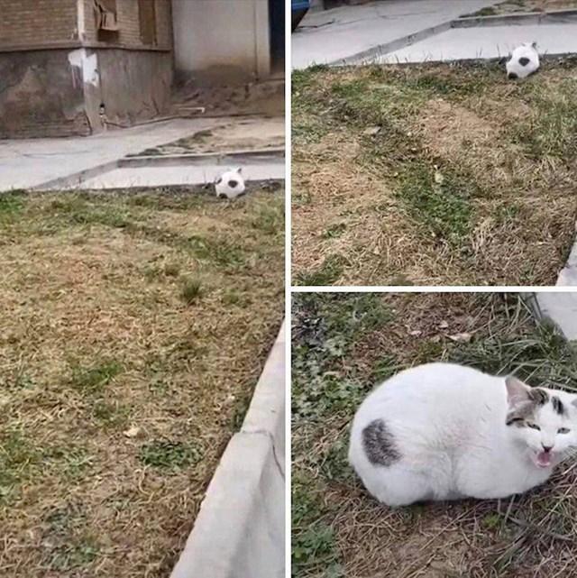 11. Lopta...ne, mačka!