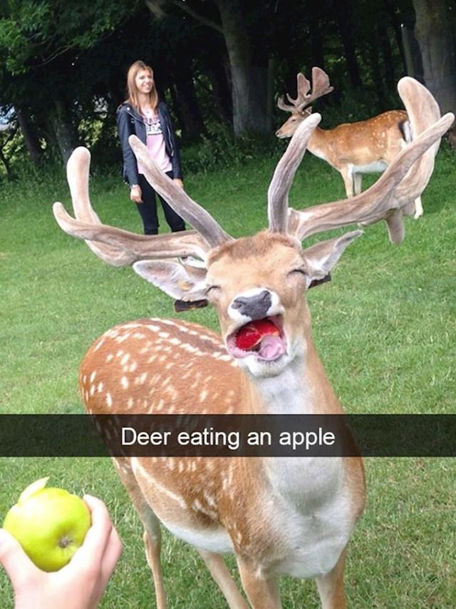 14. Jelen koji jede jabuku.😍