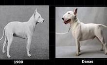 VIDEO Ovako su psi i druge životinje izgledali prije 100 godina