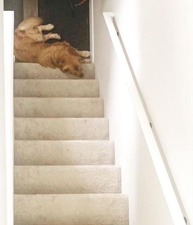 3. Fotkao je svojeg psa iz čudnog kuta. Ljudi sada nikako ne mogu skužiti leži li on na dnu ili vrhu stepenica...