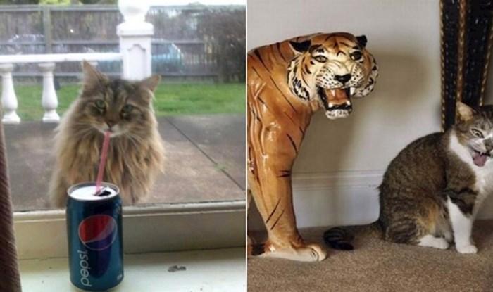 19 savršeno tempiranih fotki mačaka