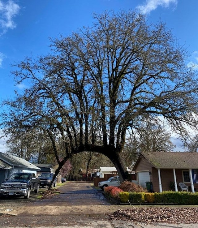 Ako ne vjerujete u čuda - pogledajte ovo drvo dva puta.