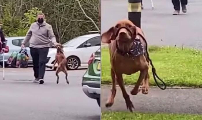 VIDEO Pas je ugledao vlasnicu nakon 18 mjeseci, rastopit ćete se od njegove emotivne reakcije