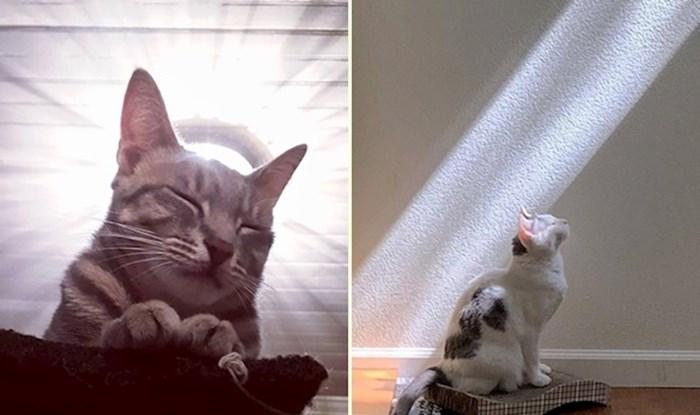 20 fotografija na kojima mačke izgledaju kao da su božanstva