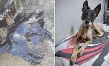 Pas koji je nađen potpuno prekriven katranom uspješno se oporavlja