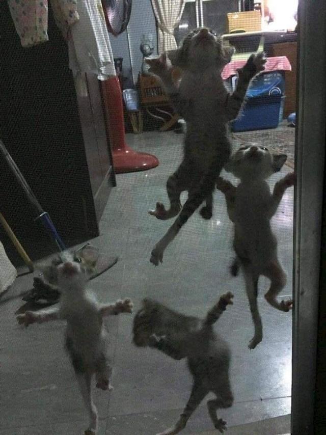 15. Mace ili gušteri?