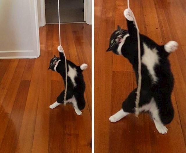 9. Maca koja se obožava igrati sa špagom