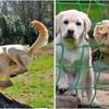 20 smiješnih pasa koji su se našli u nesretnim situacijama