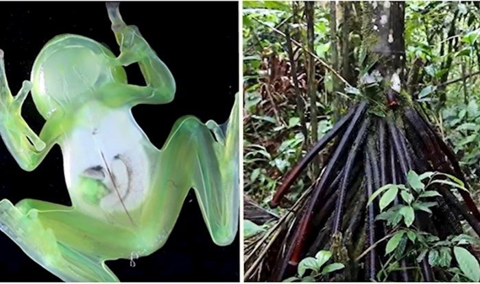 VIDEO 10 bizarnih stvari koje su pronađene u dubinama amazonske prašume