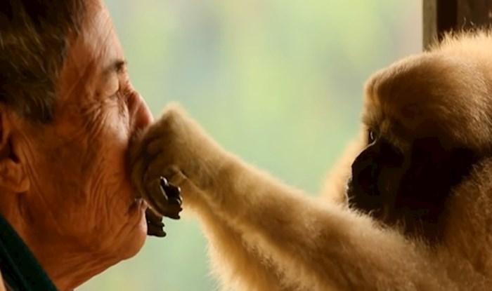 VIDEO Preslatka divlja majmunica ima poseban odnos s ljudima