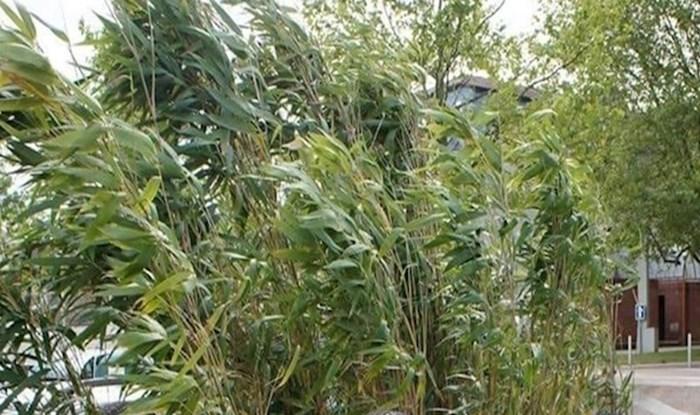 Pogledajte najčudniju 'teglu' ikad iz koje rastu ove biljke
