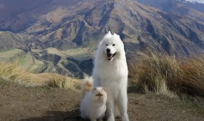VIDEO Nasmijani pas i mrzovoljna mačka su duo iz snova, njihovo prijateljstvo osvojilo je Instagram