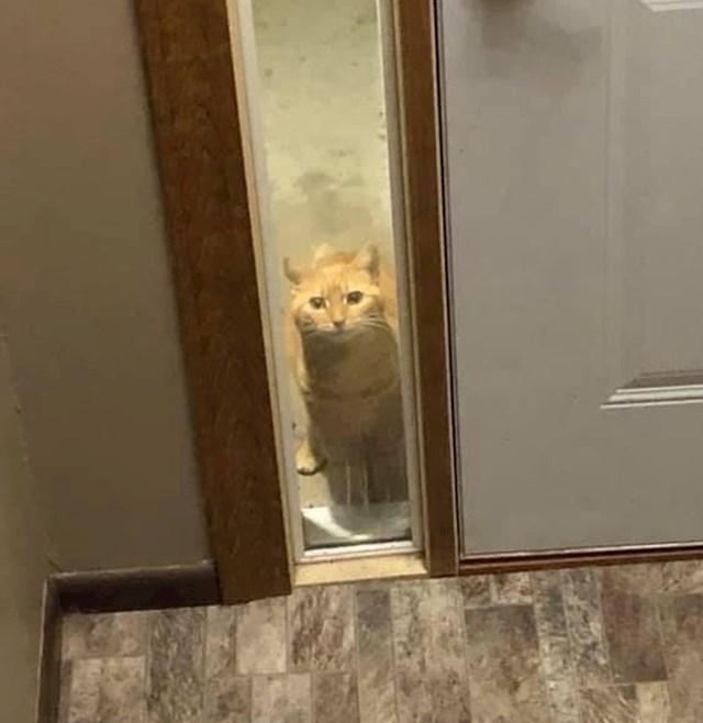 """12. """"Jednom sam zamjaukao na susjedovu mačku i od tada redovito navrati do moje kuće čisto da provjeri što radim."""""""