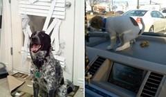 Ovi nestašni psi napravili su pravi dar mar i pokazali da nisu mačke uvijek negativci
