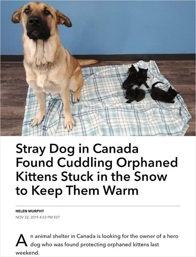 28. Napušteni pas je brinuo o mačićima koji su ostali bez majke i spasio im život.