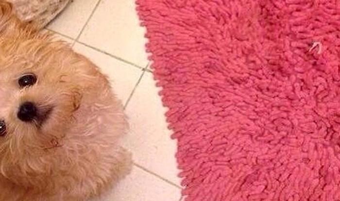 Umiljati psić pripremio je vlasnici iznenađenje za Valentinovo