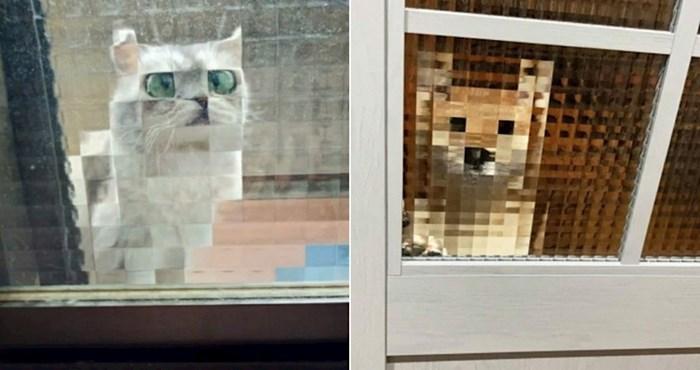 20+ životinja koje zbog stakla izgledaju kao likovi iz starih videoigrica