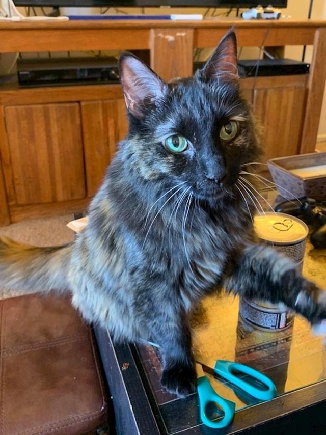 """11. """"Vodio sam kćer u sklonište za životinje kako bi udomili mačku.  Odabrala je ovu 14-godišnju ljepoticu. """""""