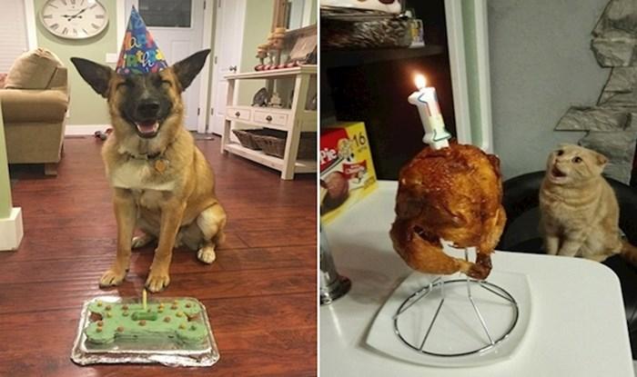 20 sretnih životinja koje su rođendan proslavile bolje od većine ljudi