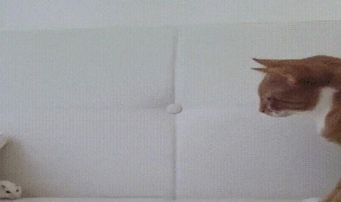 Reakcija ove mačke kad joj se približio miš sve je samo ne normalna