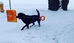 Simpatična koreografija ovog psa s lopatom izmamit će vam osmjeh na lice