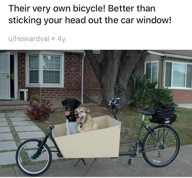 """10. """"Oni imaju vlastiti bicikl. Bolje nego da izviruju glavom kroz prozor auta."""""""